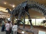 Yale's Peabody Museum